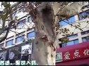 [拍客]愤怒!大片<em>行道树</em>惨遭破坏