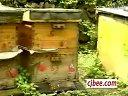 蜜蜂其它病防治 (5851播放)