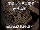陈超峰蝎子养殖新技术视频教程