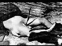 转自国外-二战侵华战争日军对中国及同盟国的暴行-【挚爱1980】
