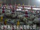 养鸡技术视频养鸡自动加料机