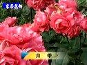 家居养花技术视频