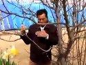 梨树休眠季的修剪视频