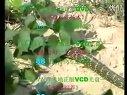 特种养殖技术养蛇技术视频