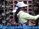 贵州土鸽子养殖(行业分析、创业指导、致富资讯电13788010438)视频