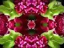 家庭如何种花和养花18-牡丹催花栽培技术视频