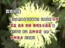 家庭如何种花和养花16-菊花实用栽培技术1视频
