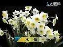家庭如何种花和养花52-家居养花知识视频