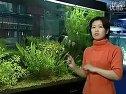家庭养鱼必备常识-1如何选择水族箱(鱼缸)视频