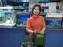 家庭养鱼必备常识-2如何配备水族箱视频