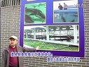 澧县鲟鱼养殖基地视频