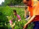 夏季桃树幼苗的修剪视频