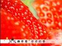 草莓种植技术---佐田氏视频