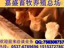 肉牛养殖技术夫妻养牛规范