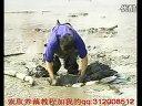 莲藕种植技术_chunk_4 (1602播放)