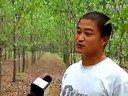 青岛金蝉养殖基地视频