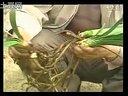 家庭如何种花和养花-2剪枝和繁殖视频