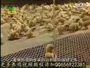 养鸡怎么样养鸡养鸡教程养鸡入门