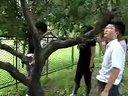项目八行道树行列树修剪视频