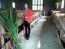 湖南淞耀黑豚竹鼠繁育基地的孟鑫讲解饲养黑豚所注意的事项视频