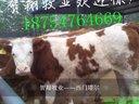 小尾寒羊的188金宝博官方直营网【hzniuyang】