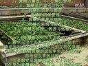 株洲黄鳝养殖技术视频