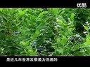 蓝莓种植-汇森蓝莓苗木专业机构视频