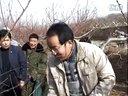 桃树冬季整形修剪技术视频