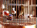 民和麻料鸟、狮子滚绣球、【神王】视频
