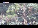 福安白云山猕猴视频