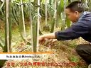 火龙果种植技术火龙果种植
