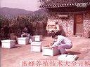 01_蜜蜂养殖技术_中华蜜蜂养殖_蜜蜂养殖_视频