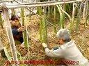 火龙果种植技术视频资料