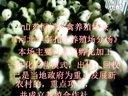 河北山鸡苗石家庄孔雀红腹锦鸡苗各种珍禽种苗