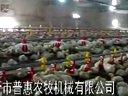 养鸡设备/自动养鸡设备/养鸡水线料线