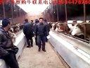 东北肉牛犊,东北黄牛犊,东北黄牛交易市场,东北牛犊价格,东北肉牛品种,吉林肉牛15044478780视频