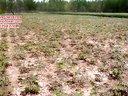 2013-418牡丹种植区视频