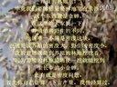 济宁金蝉养殖知了猴养殖视频