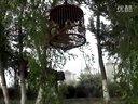 青海西宁城北区北园村,麻料鸟叫声,五字清晰,鸟好不好大家来评视频