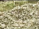 茶花种植技术知农网视频