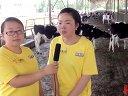 2013荷斯坦牛场之旅走进青海春源奶牛场视频