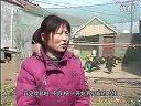 凤城孔雀养殖基地采访标清视频