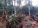 荣县恒达畜禽养殖有限公司----实地拍摄林下散养鸡