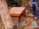 321土蜂_2视频