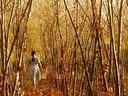 阳光灿烂的日子_阳光灿烂的日子cd2[www.77vcd.com]