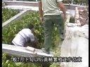 黄鳝怎么养,鳝鱼养殖的经验