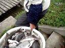 2014421方塘加鳊鱼视频