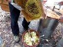 自家养土蜂(中蜂)收蜜过程视频
