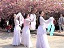樱花-惊鸿舞视频