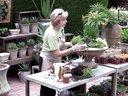 【醉花网】大型多肉植物组合盆栽的布景造型DIY视频